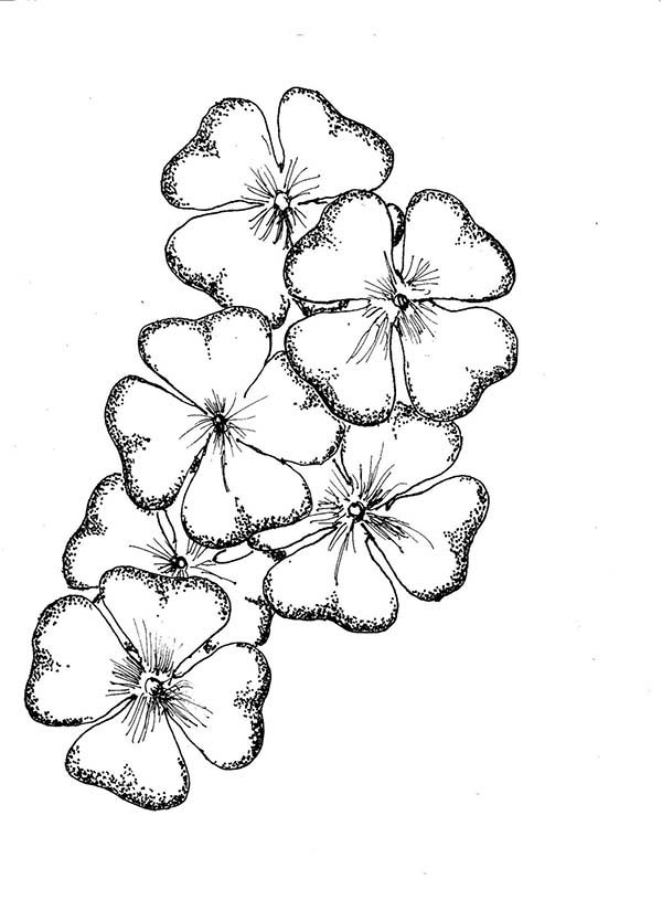 A Bouquet Of Four Leaf Clover Coloring Page
