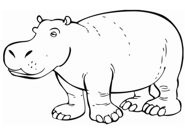 Amazing Hippo Coloring Page NetArt