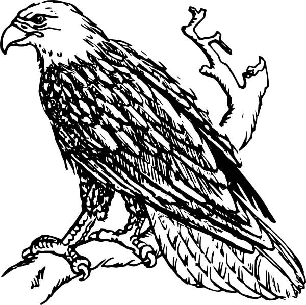 awesome bald eagle coloring page - American Bald Eagle Coloring Page