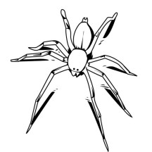 Awesome Drawing of Spider Coloring Page