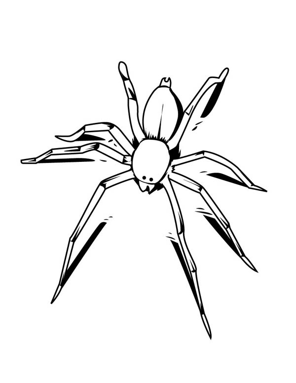 awesome drawing of spider coloring page - Spider Coloring Page