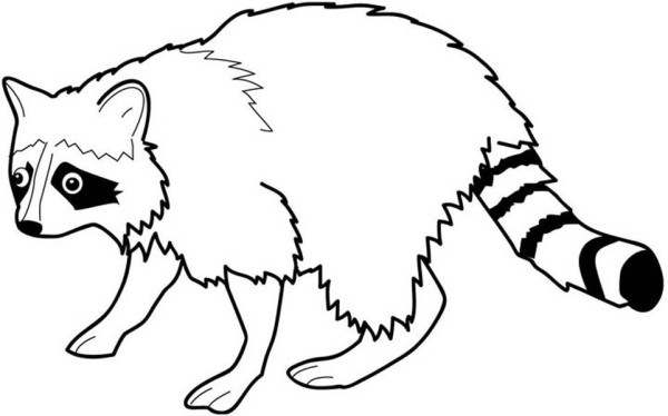 Awesome Raccoon Coloring Page Netart