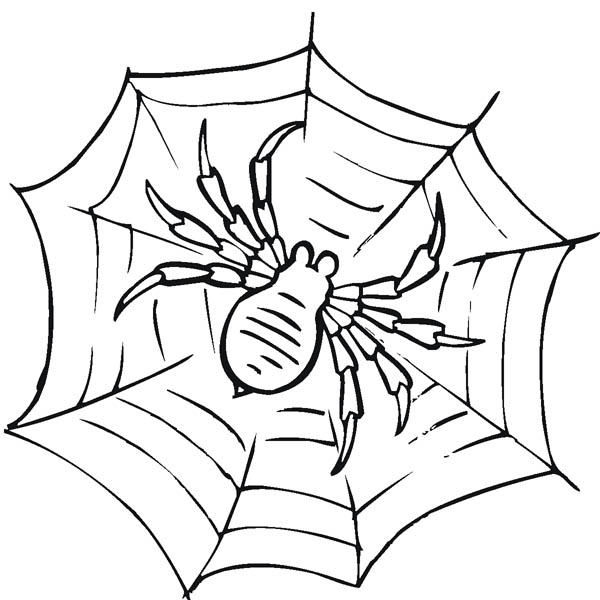 Awesome Spider Web Coloring Page - NetArt