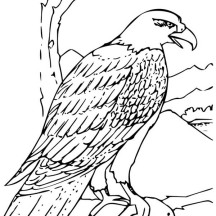 Bald Eagle Eating Fish for Lunch Coloring Page