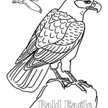 Bald Eagle Flying Finding Her Mate Coloring Page