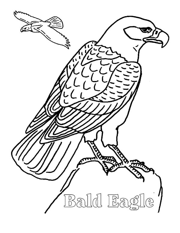 Flying eagle coloring pages for Eagle coloring pages