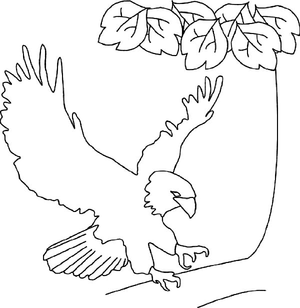 Bald cypress coloring pages ~ Bald Cypress Coloring Page Coloring Coloring Pages