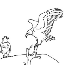 Bald Eagle Looking for His Mate Coloring Page