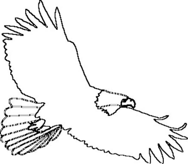 Bald Eagle Outline Coloring Page  NetArt