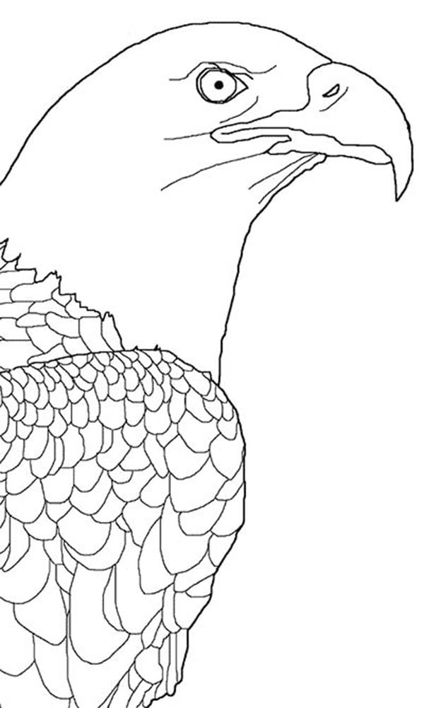 Coloring Page Eagle Simple Astonishing Golden Eagle Coloring Page