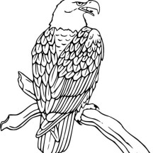 Bald Eagle Rest on Tree Coloring Page