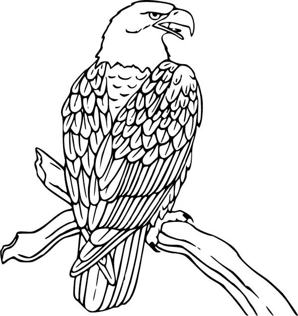 bald eagle is hungry coloring page - Coloring Page Eagle