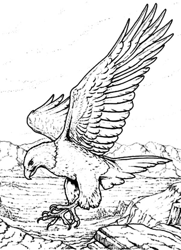 Bald Eagle with Sharp Claws Coloring Page NetArt