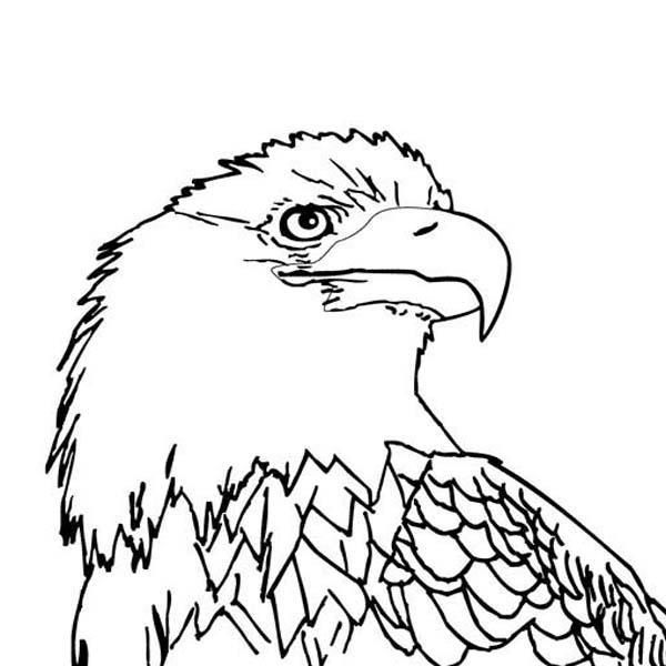 bald eagle with smooth feather coloring page - Bald Eagle Coloring Page