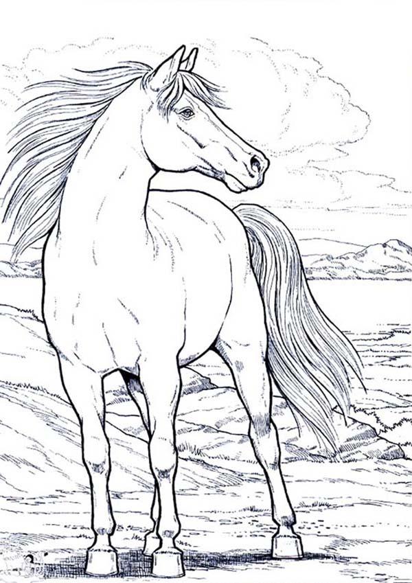 Beautifful White Horse in Horses