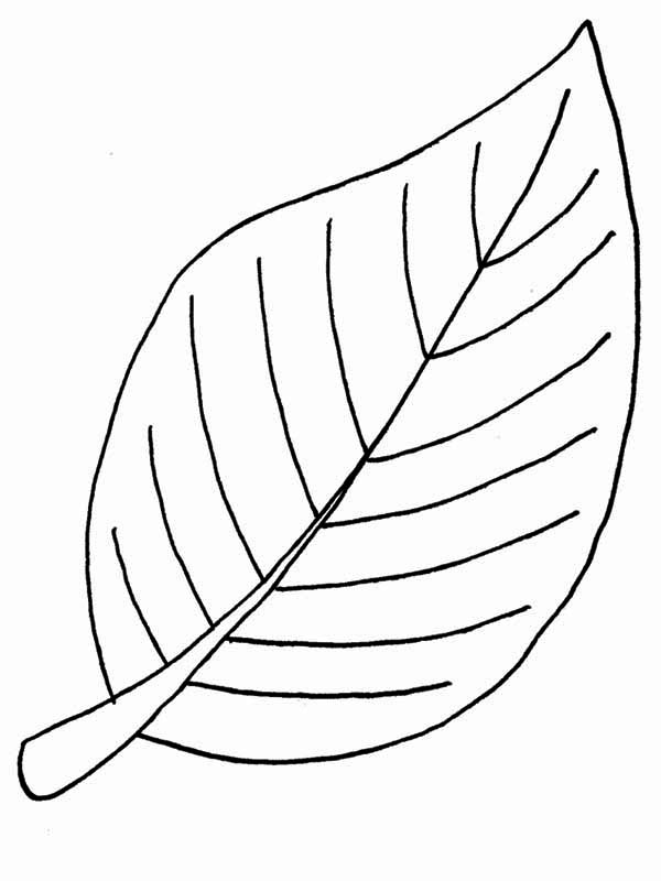 Beech Fall Leaf Coloring Page - NetArt