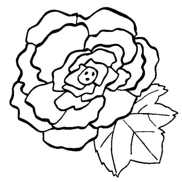 Begonia Flower Coloring Page