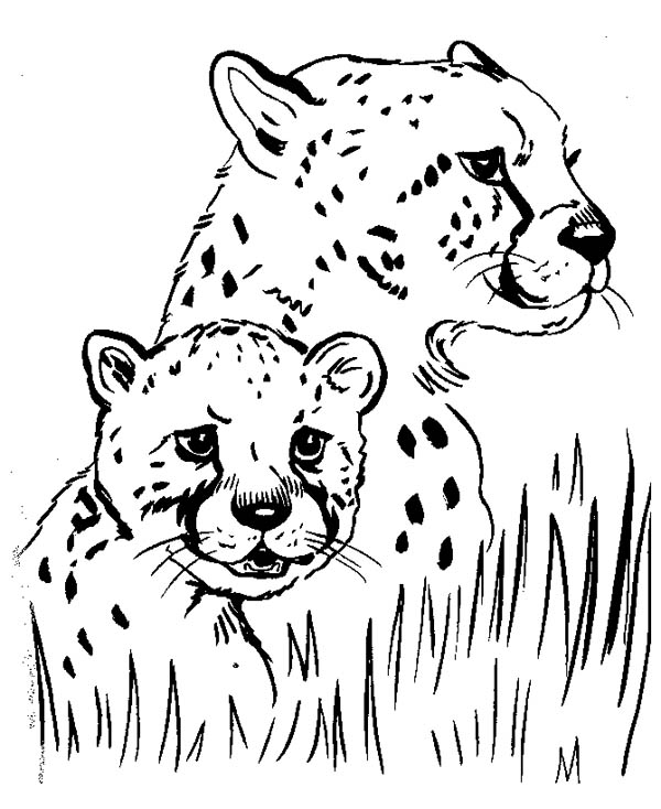 Cheetah Hide Under the Grass Coloring Page NetArt