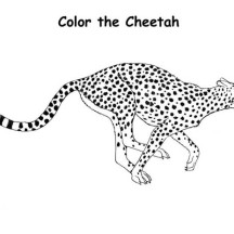 Cheetah Hunting Coloring Page