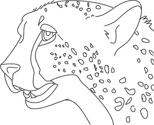 chettah girls coloring pages - photo#15