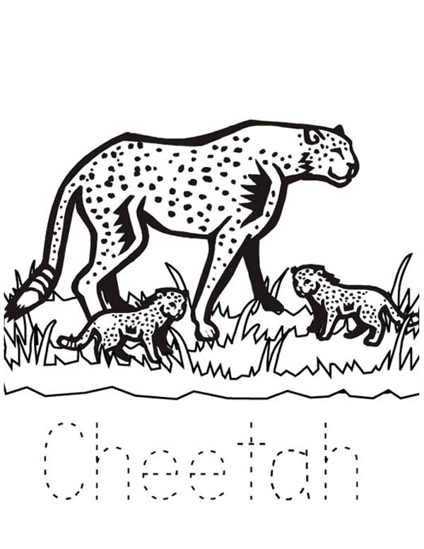 baby cheetah coloring pages - photo#42