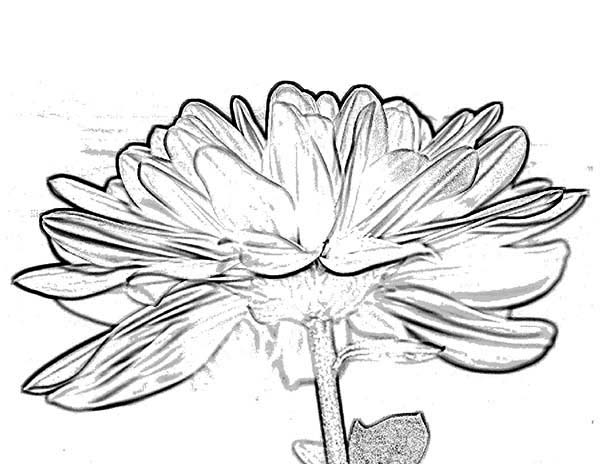 Funky Chrysanthemum Coloring Page Collection