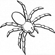Dangerous Spider Coloring Page
