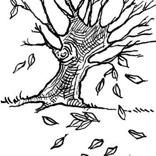 Dogwoods Tree Fall Leaf Coloring Page