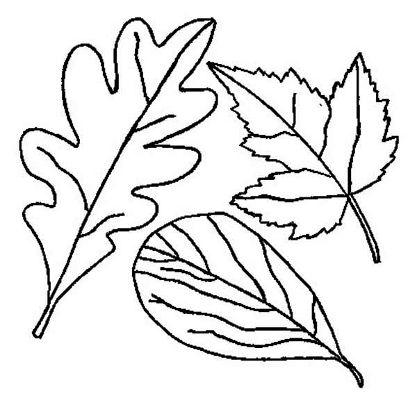 Drawing of Fall Leaf Coloring Page - NetArt