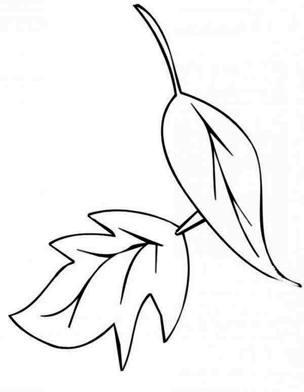 Dry Fall Leaf Coloring Page