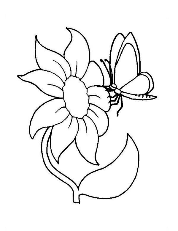 flower and butterfly coloring page - netart - Coloring Page Butterfly Flower