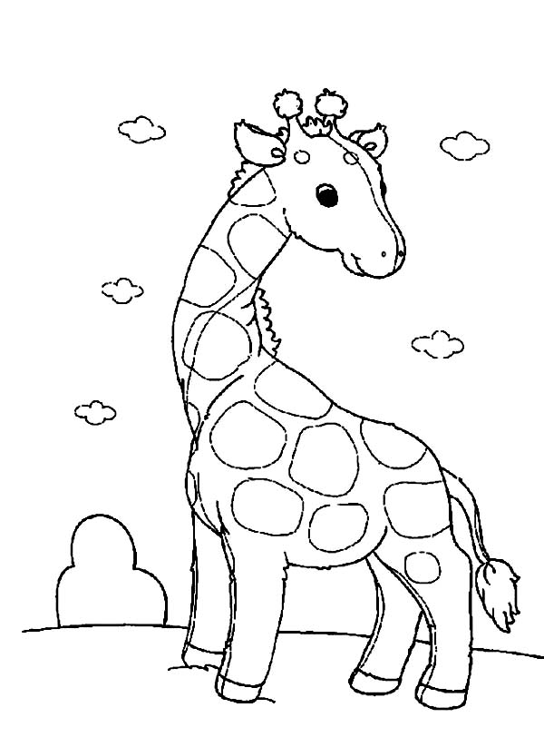 Funny Giraffe Coloring Page Netart Giraffe Coloring Page