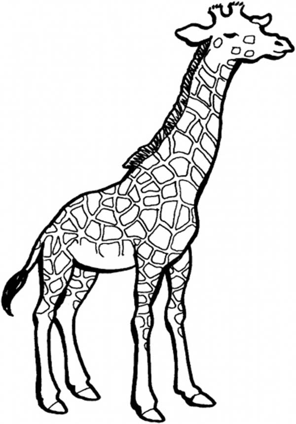 Genius image pertaining to giraffe coloring pages printable