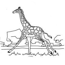 Giraffe Running Coloring Page