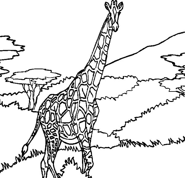 Giraffe in the Jungle Coloring Page