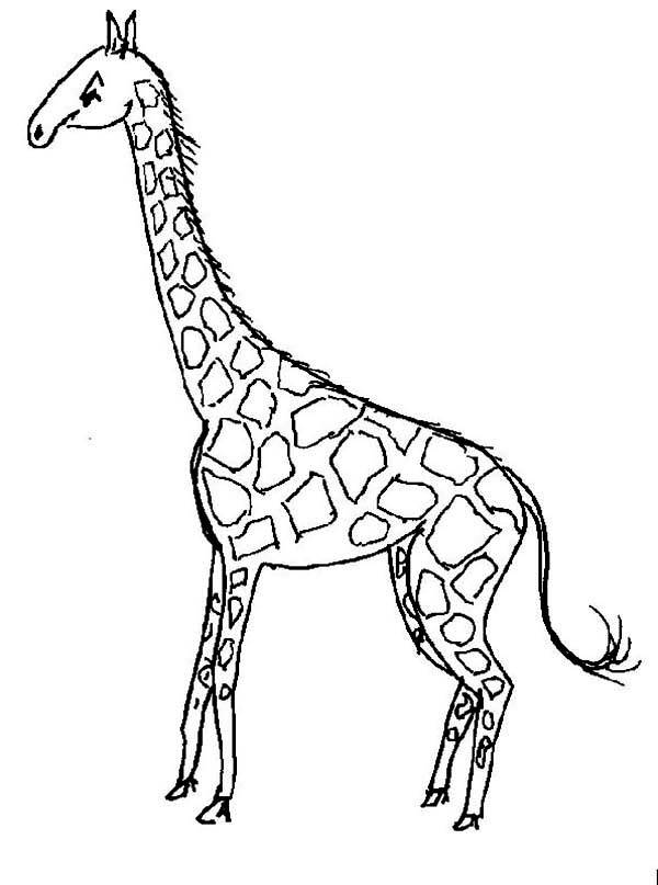 Giraffe with Long Tail Coloring Page