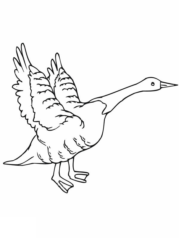coloring pages of cartoon goose - photo#40