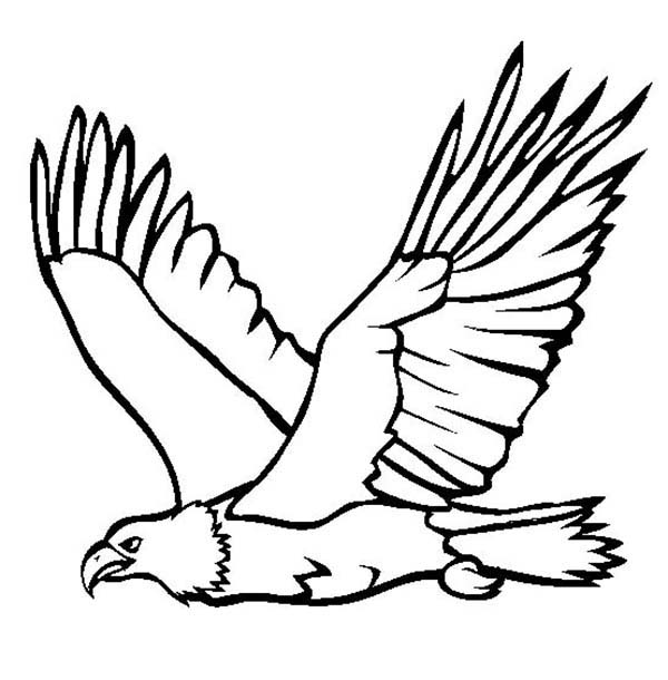 Great Flying Bald Eagle Coloring Page NetArt