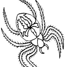 Hairy Spider Coloring Page