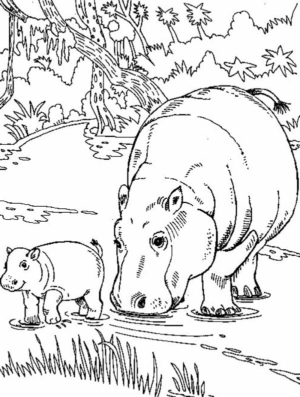 Hippo Eating with Her Baby Coloring Page NetArt
