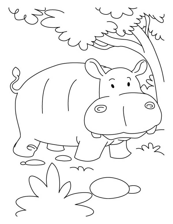 Hippo Coloring Pages Hippo Coloring Pages Hippo Coloring