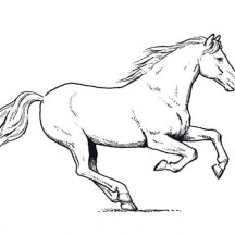 Horse Amazing Pace in Horses Coloring Page