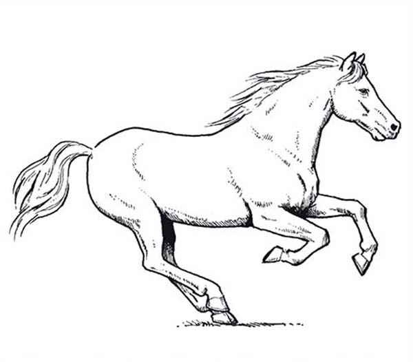 Horse Amazing Pace In Horses Coloring Page You Can Download Or Print