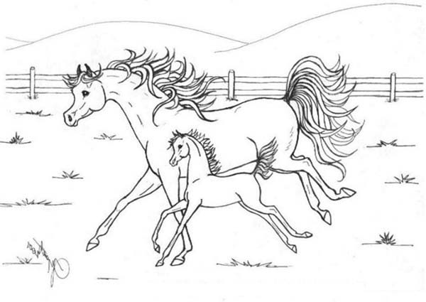 Horse Mother Running with Her Baby in Horses Coloring Page - NetArt