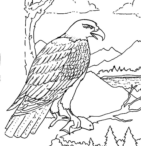 Hungry Bald Eagle Eat Coloring Page - NetArt