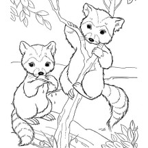 Little Raccoon Climbing Tree Coloring Page