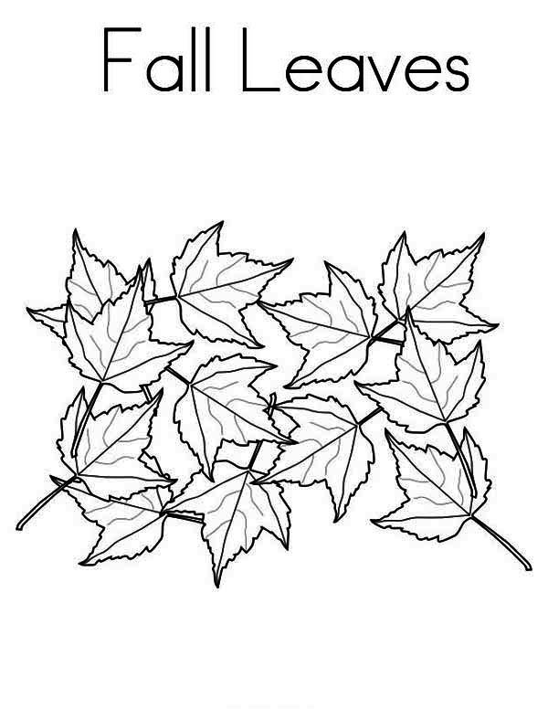 here home fall leaf maple tree fall leaves in fall leaf coloring page