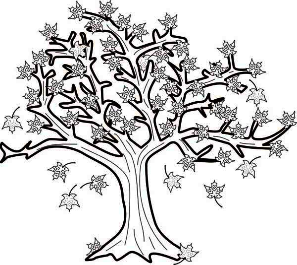 maple tree in fall leaf coloring page - Tree Leaves Coloring Page