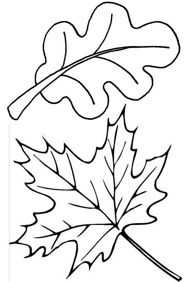 Maple and Oak Fall Leaf Coloring Page NetArt