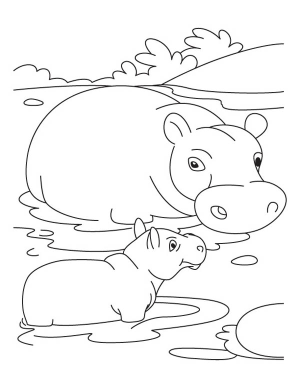 swamp animals coloring pages coloring pages. Black Bedroom Furniture Sets. Home Design Ideas